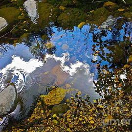 Oak Creek Sun Stream by FlyingFish Foto