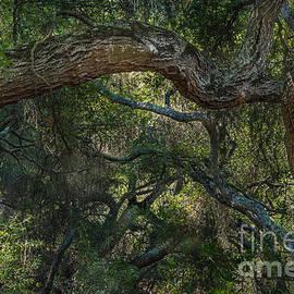 Alexander Kunz - Oak Jungle