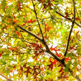 Oak Study 7 by Melinda Ledsome