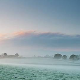 Oak Tree In Mist by Jeremy Walker