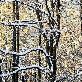 Alexander Senin - Oak Trees In Winter