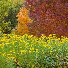 Alan L Graham - October Color Palette