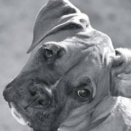 Barbara Dudley - Oh Puppy