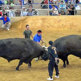 Jeff at JSJ Photography - Okinawan Culture Bull versus Bull Okinawan Bullfighting