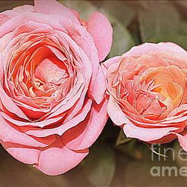 Dora Sofia Caputo Photographic Design and Fine Art - Old Fashioned Roses