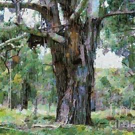 Fran Woods - Old Gum Tree