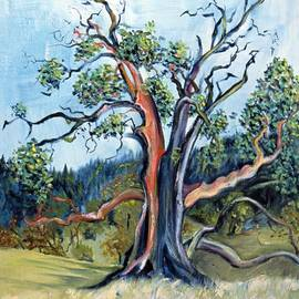 Old Madrone Tree in November  by Asha Carolyn Young