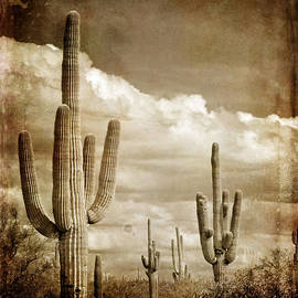 Lane Erickson - Old Photograph of Cactus