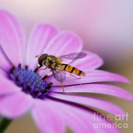 On a daisy by LHJB Photography