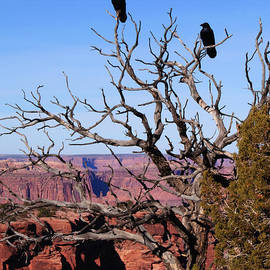 On Lookout in Canyonlands by Bob and Nancy Kendrick