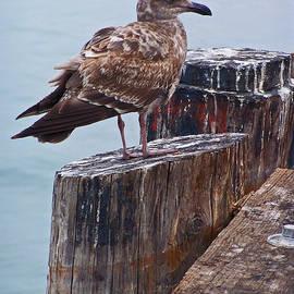 On the Pier by Jennifer Robin