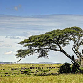 Claudio Bacinello - On the Serengeti