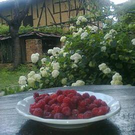 Zornitsa Tsvetkova - One hundred years old barn