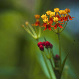 Orange And Yellow Flowers by Bradley R Youngberg