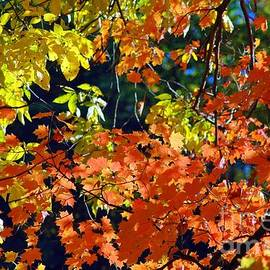 Kathleen Struckle - Orange And Yellow