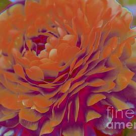 Dora Sofia Caputo Photographic Design and Fine Art - Orange Blossom Pop Art
