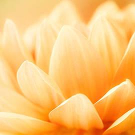 Orange Dahlia by Kristiina Hillerstrom
