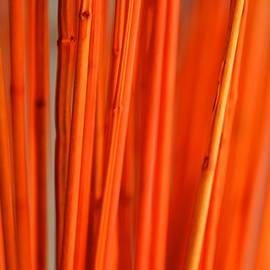 Corinne Rhode - Orange Display