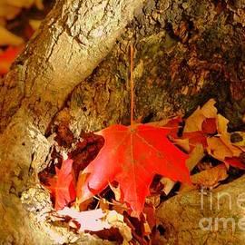 Kathleen Struckle - Orange Leaf