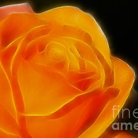Gary Gingrich Galleries - Orange Rose 6308
