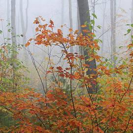 Juergen Roth - Orange You Glad