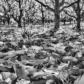 Orchard Floor View Monotone by Allan Van Gasbeck