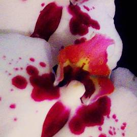 Sharon Ackley - Orchid Abstract 2