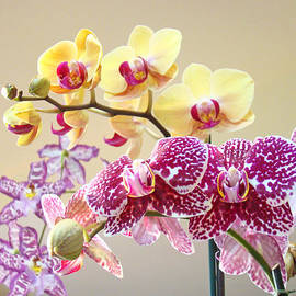 Orchid Art Prints Orchids Flowers Floral Bouquets by Patti Baslee