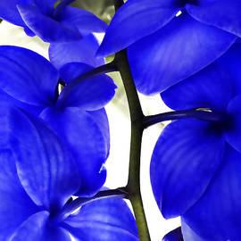 Nancy E Stein - Orchid in Blue