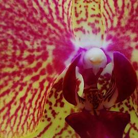 Sharon Ackley - Orchid Macro