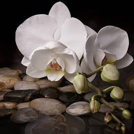Orchid - Sensuous Virtue by Tom Mc Nemar