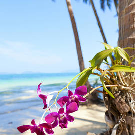 Orchids on the beach by Alexey Stiop