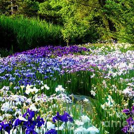 Japanese Iris Botanical Garden Wall Art by Carol F Austin