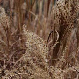 Arlene Carmel - Ornamental Grass