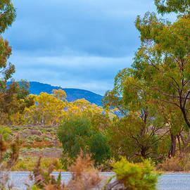 Ross Carroll - Outback Road Colours