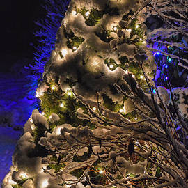Outdoor Christmas Tree by Meandering Photography