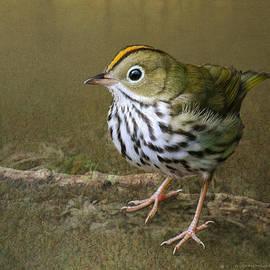 Ovenbird On Soft Ground by R christopher Vest