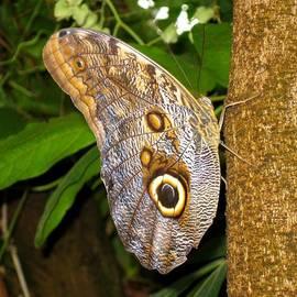 Owl Disguise by David Dunham