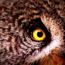 Ramona Johnston - Owl