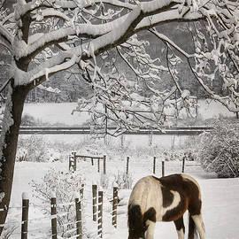 Lori Deiter - Paint in the Snow
