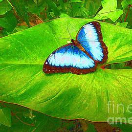 Painted Blue Morpho by Teresa Zieba