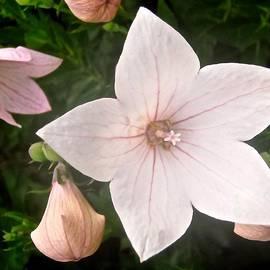 Stephanie Moore - Pale pink flower