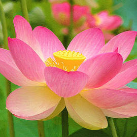 Pale Pink Lotus by Dean Wittle