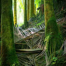 Palm Forest by Ellen Cotton