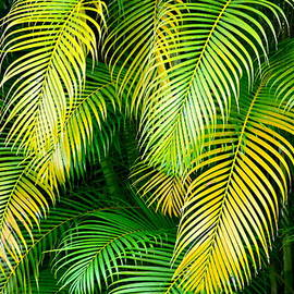 Karon Melillo DeVega - Palm Leaves in Green and Gold
