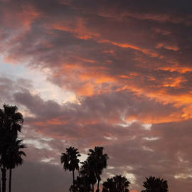 Palm Sunset - California by Glenn McCarthy