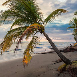 Palm Tree At Dusk by Craig Lapsley