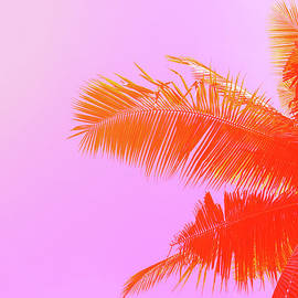Palm Tree On Sky Background. Palm Leaf by Slavadubrovin