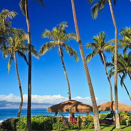 Palm trees in Hawaii with cabana  by Nature  Photographer