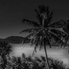 Palm Trees Looking Over Puerto Galera Bay - Philippines by Colin Utz